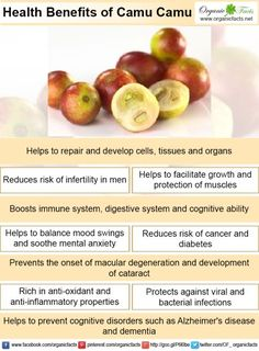 Some of the most interesting benefits of camu camu include its ability to boost the immune system, protect against chronic diseases, reduce inflammation, detoxify the body, prevent viral infections, reduce mood swings, promote eye health, protect the sexual organ system, and prevent cognitive disorders.