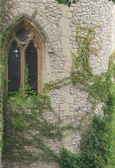 Tower of London window casement.  Love the ivy...and took this picture myself.