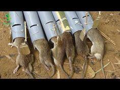 trampas para ratas versión 2 - chico inteligente crear nuevas trampas para ratas con tubos de PVC - YouTube