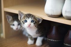 This professional hide-and-seeker. | 39 Overly Adorable Kittens To Brighten Your Day