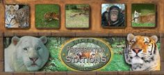 TIGERS Reserve & Preservation Station, list of best things to do Myrtle Beach SC. Tigers Myrtle Beach, Myrtle Beach Sc, Myrtle Beach Things To Do, South Carolina, Preserves, Dreaming Of You, Safari, Places To Go, Exotic