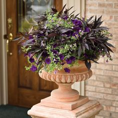 You don't have to fill your whole porch with flowers to create a welcoming space. A simple classic urn featuring a monochromatic combination such as this can be all you need. We call this combination 'Truly Elegant'--its rich dark and purple tones add a