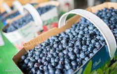 A guide to Saguenay restaurants and sampling the flavours of Lac-Saint-Jean, from blueberries to tourtière and village eats to fine dining. Raspberry Beer, Lac Saint Jean, Cheese Maker, Blue Fruits, Artisan Cheese, Wild Blueberries, Homemade Pie, Roasted Almonds, Wild Mushrooms