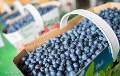 Bleuets du Saguenay-Lac-Saint-Jean | Saguenay-Lac-Saint-Jean Blueberries Credit - @nwmypassport