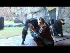 Jane Goodall visits the Houston Zoo's chimpanzees Houston Zoo, Jane Goodall, Home Movies, Chimpanzee, Galveston, African, Youtube, Texas, Fictional Characters