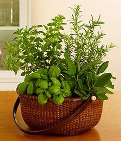 nice herb gift basket for dirty santa Culture D'herbes, Comment Planter, Pot Jardin, Pot Plante, Herbs Indoors, Growing Herbs, Fresh Herbs, Potted Herbs, Ikebana
