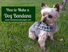 If you can sew a straight line on a sewing machine, you can make a dog bandana! Pick the fabric of your choice and create a custom dog bandana for your favorite fur baby! Here's the simple steps showing you how to make a dog bandana! Puppy Bandana, Dog Crafts, Dog Hacks, Dog Accessories, T Rex, Dog Grooming, Dog Life, Dog Training, Best Dogs