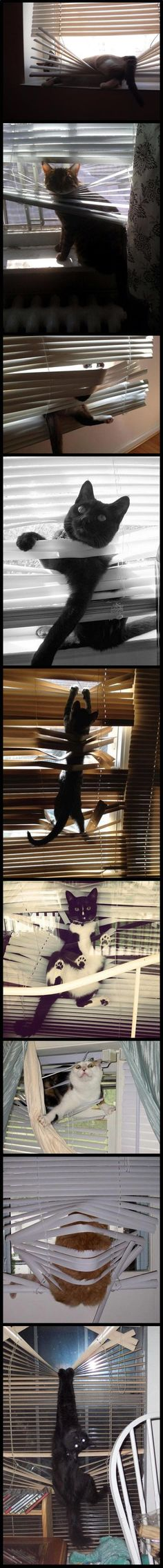 I'm getting a better understanding of why my blinds look the way they do...