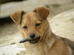 El séptimo mes del cachorro