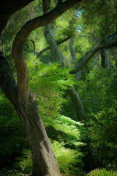 https://flic.kr/p/8nFFGG | Descanso Forest | Discanso Gardens, La Canada, Ca. Worldwide Photowalk July 24, 2010