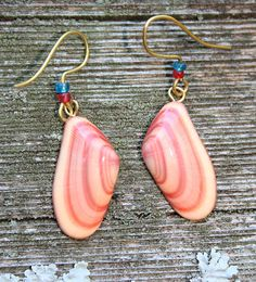 Coquina Shell Earrings - Natural Pink Coral Peach