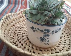 Arklow Pottery Small Plant Pot // Made in Ireland // Succulent Small Potted Plants, Blue Flowers, Flower Power, Ireland, Planter Pots, Succulents, Pottery, Ceramics, Rose