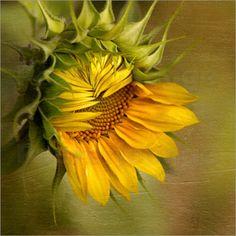 Betty Wiley - Summer's beauty