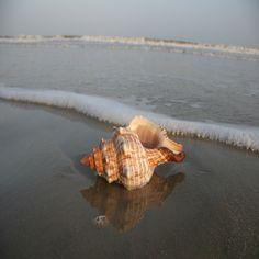 Texas seashell 2 by foureyestock on DeviantArt