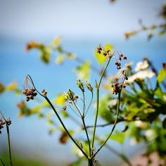 Sensommerudsigt til Lillebælt  #visitfyn #fyn #nature #nature_perfection #naturelovers #mothernature #natur #denmark #danmark #dänemark #landscape #assensnatur #assens #mitassens #vildmedfyn #fynerfin #vielskernaturen #visitassens #instapic #picoftheday #sommer #summer2016 #lillebælt #sea