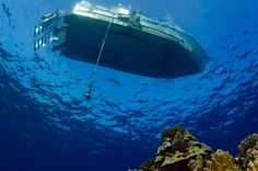 Photo Gallery - Underwater Images of Hawaii http://www.mauiscuba.com/photo-gallery/