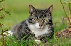 Could your cat's behavior be a sign of illness? #Cats #PetFirst