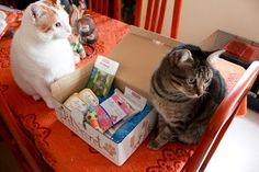 Legión y Muffin junto a su caja PetSecret.