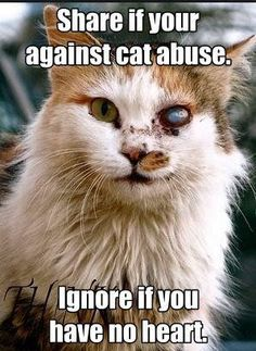 Please repost! In 2007 around 337 cats were abused and the rate has gone up. Repost pray and love your cat!