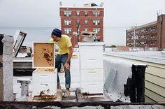 urbán méhész