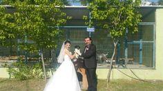 Kocaeli'de yaşayan Ertan Kalem, Gebze ilçesinde su kanalına düşen bir köpeği kurtarırken tanıştığı Kocaeli Hayvan Hakları Derneği Genel Sekreteri Minel Gizem'le nikah kıydıktan hemen sonra hayvan barınağına giderek, kurtardıkları köpeği tekrar ziyaret etti. Detaylar ajanimo.com'da.. #married #ajanimo #ajanbrian #evlilik #animal #hayvan #köpek #animals