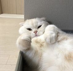 cats pets cute cats pets cute The post cats pets cute appeared first on Katzen. Animals And Pets, Baby Animals, Funny Animals, Cute Animals, I Love Cats, Crazy Cats, Cute Cats, Crazy Dog, Funny Animal Photos