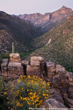 Sabino Canyon: I lived in Tucson for 6 years and never hiked Sabino. I'll have to make it happen now that I'm going back. :)