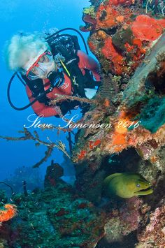 #diving the #Wall in #StCroix #USVI. From beer-guzzling pigs to healthy reefs and corals, here's why divers love #StCroix #USVI. #scuba #diving Come join us! http://villamargarita.com/st-croix-scuba-diving-us-virgin-islands/ #VillaMargarita #USVirginIslands #PADI #caribbean
