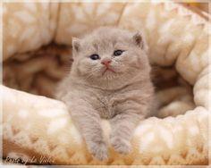 I die from the cute. Thunk. (via La violka)