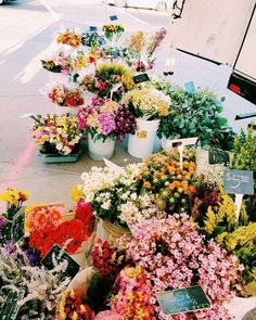Pretty colorful flowers at the flower market. My Flower, Wild Flowers, Beautiful Flowers, Purple Flowers, Cactus Flower, Exotic Flowers, Yellow Roses, Fresh Flowers, Pink Roses