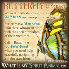 Butterfly Spirit Totem Power Animal Symbolism Meaning 1200x1200