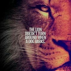 20 Motivational Quotes Brought To You By Big And Powerful Cats - I Can Has Cheezburger? Lioness Quotes, Wolf Quotes, Wisdom Quotes, True Quotes, Hater Quotes, Laugh Quotes, King Quotes, Short Inspirational Quotes, Motivational Quotes For Success