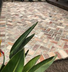 Our first little project is complete.nice little recycled brick entertaining area to start the year. Love the colours in this one. Brick Driveway, Brick Pathway, Brick Paving, Driveway Ideas, Small Backyard Landscaping, Landscaping Jobs, Backyard Ideas, Easy Garden, Diy Garden Decor