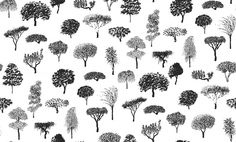 Linnanpuisto Black White (17950) - Marimekko Wallpapers - A sketchy design of single trees as and all over motif in a variety of shapes – with a delicate hand printed effect.  Shown in the bold black on white colourway. Paste the wall. Please request sample for true colour match.