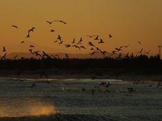 Gaivotas , sunset , por-do-sol