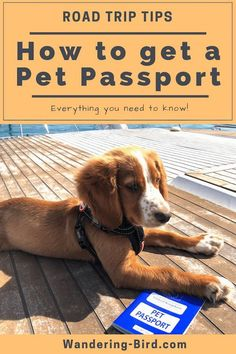 How long does it take to get a Pet Passport? What jabs does your dog need? How much does it cost? This guide answers all these questions and more so you can continue to enjoy your adventures with your favourite companion. Road Trip On A Budget, Road Trip Hacks, Road Trips, Passport Travel, Dog Travel, Travel Pics, Family Travel, Motorhome Travels, Europe Travel Tips