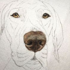 Always the eyes first--to capture the spirit and character. Then the nose, because it's the most fun! #InProgress
