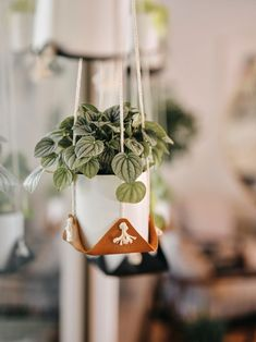 leather plant hammock hanging macrame plant hanger modern plant holder indoor plant sling hanging boho planter minimalist planter boho home Macrame Plant Holder, Macrame Plant Hangers, Plant Holders, Diy Macrame, Macrame Modern, Macrame Tutorial, Macrame Knots, Micro Macrame, Bracelet Tutorial