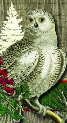 Themes - Holidays & Seasons - Winter – Page 5 – Paperproducts Design Wood Owls, White Christmas, Christmas Tree, Textiles, Winter, Holly Berries, Guest Towels, Seasons, Bird