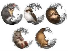 Baby Australian animal illustrations for The Perth Mint& Bush Babies coin series.