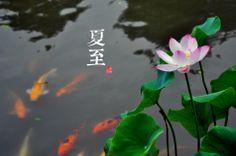 2012.11.21 <全国版24节气> @青简jane 是消化科医生,酷爱旅游,在看到日本有个做24节气照片的网站后,从拍摄了两年多的照片素材中整理、挑选、制作出了一套二十四节气摄影图中国气息浓郁。