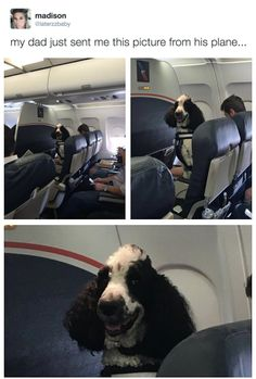 Lol! What's going on in airplanes nowdays?