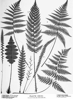 ferns drawing - Google Search