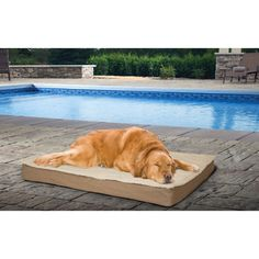 New Orthopedic Pet Bed w/Removable Cover Comfy Healthy Couch Beds For Large Dogs