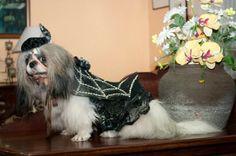 Brookie the black widdow!! Halloween Shih Tzu :)