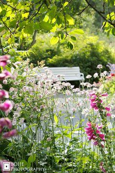 Vackra mormors blommor. Tyvärr vågar jag inte plantera fingerborgsblomster, men de är vackra.