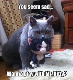 Mr kitty