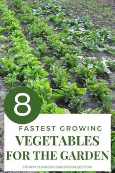 Fastest growing vegetables to plant in the garden or containers. Grow your own food and create your own food supply. Vegetables that mature within 25 - 65 days of planting. #food #gardening #vegetablegarden #fastgrowingvegetables