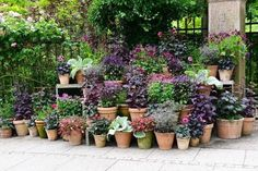 Find 15 Beautiful Container Garden Ideas to inspire your next outdooor project. Great suggestions for your own personal garden. Container Design, Container Plants, Container Gardening, Flower Containers, Outdoor Pots, Outdoor Gardens, Outdoor Spaces, Outdoor Decor, Boxwood Garden