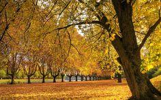 fall with scripture wallpaper | nature wallpaper widescreen ~ Christians wallpaper|Verses|Geet Zaboor ...